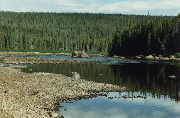 flyfishing in labrador